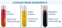 Detaliu test determinare Salmonella